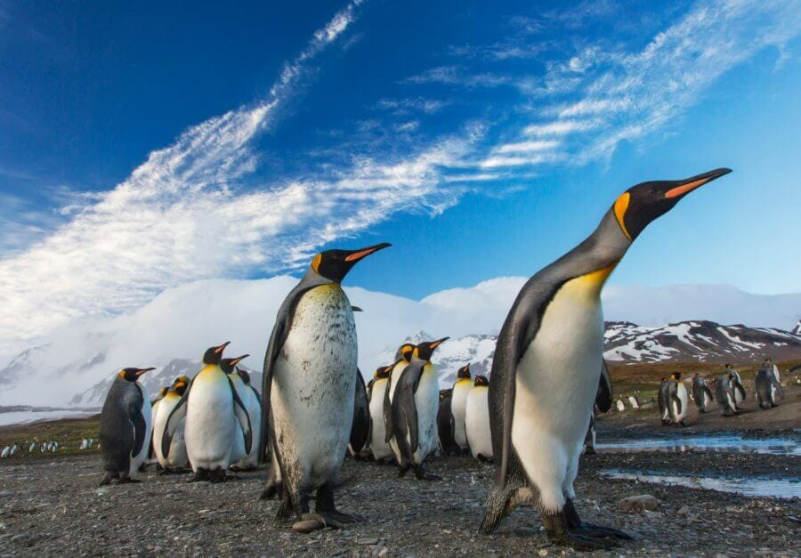 Penguins of various sizes