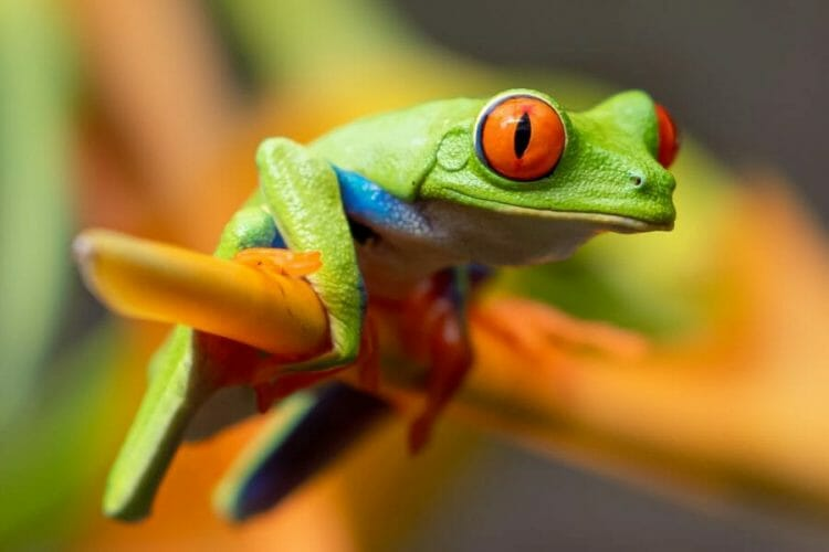 tree frog clinging to branch